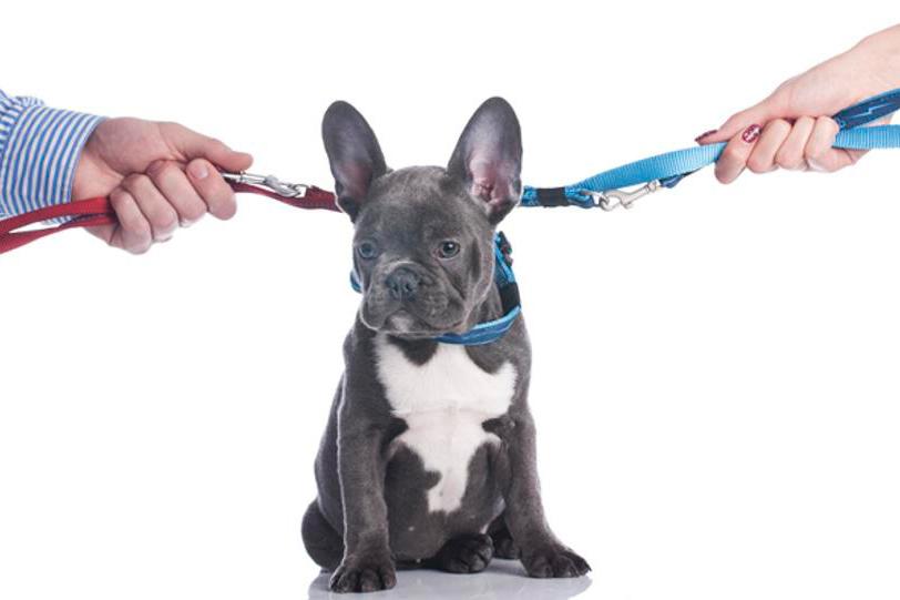 Custodia de la Mascota en una Separación
